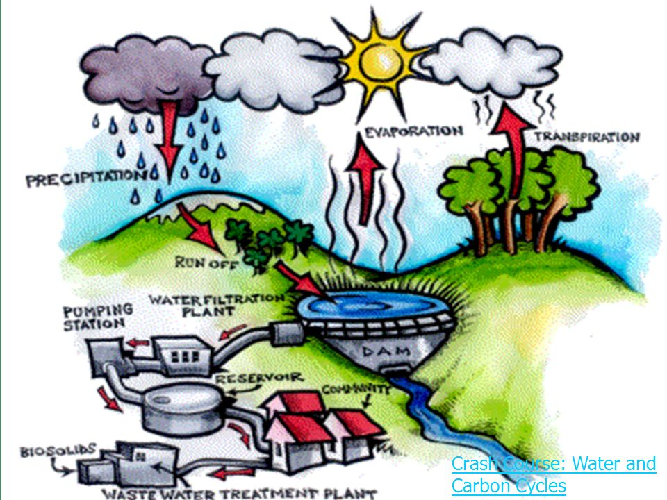 Cycles in Ecosystems Oxygen Water Carbon Nitrogen. - ppt download