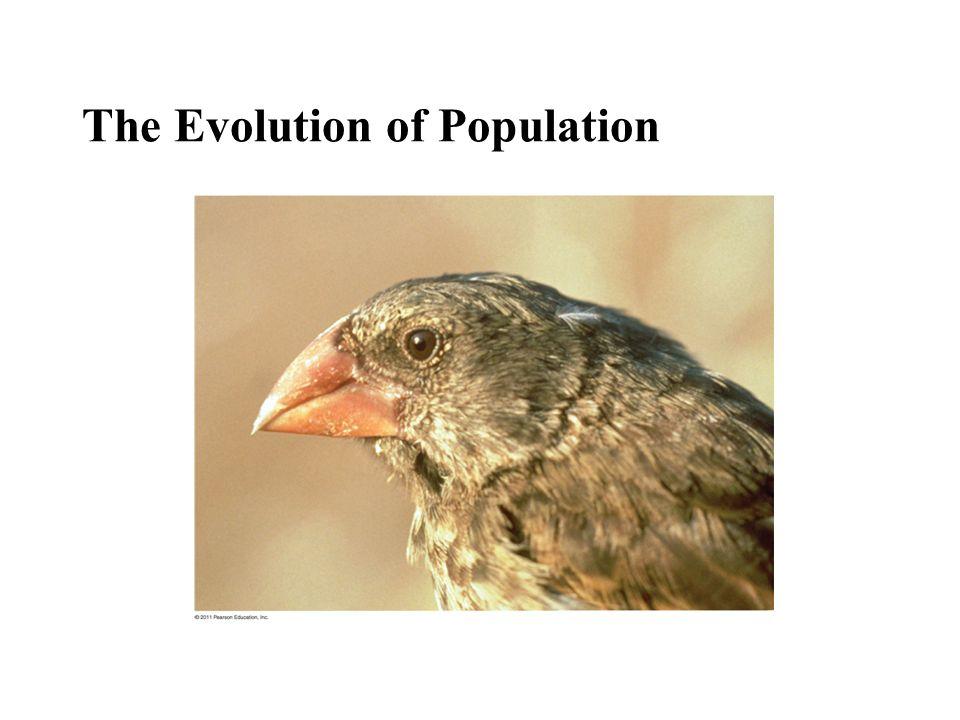 The Evolution of Population