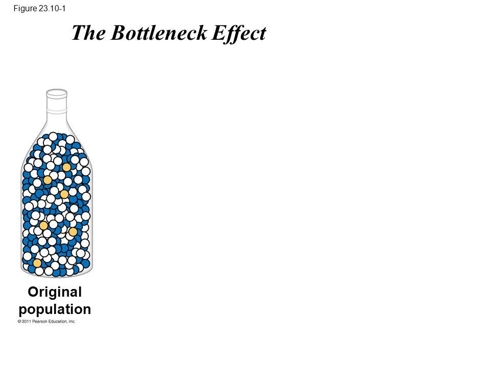 Figure 23.10-1 Original population The Bottleneck Effect