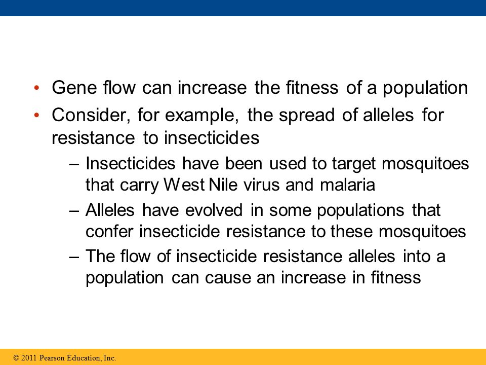 Gene flow can increase the fitness of a population Consider, for example, the spread of alleles for resistance to insecticides –Insecticides have been used to target mosquitoes that carry West Nile virus and malaria –Alleles have evolved in some populations that confer insecticide resistance to these mosquitoes –The flow of insecticide resistance alleles into a population can cause an increase in fitness © 2011 Pearson Education, Inc.