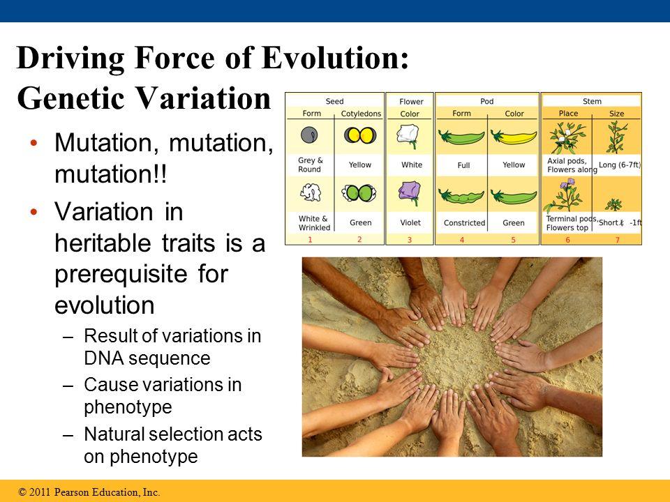 Mutation, mutation, mutation!.