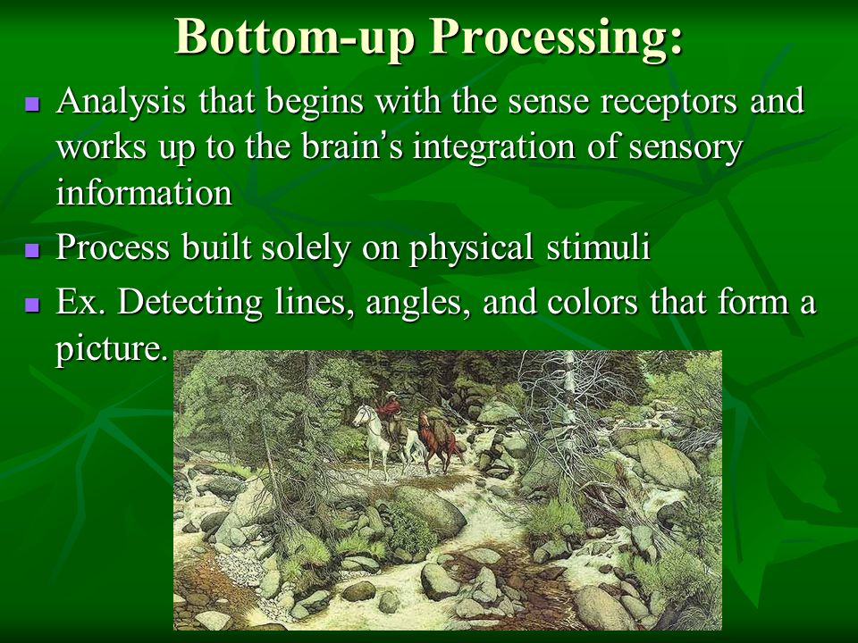 Bottom-up Processing: Analysis that begins with the sense receptors and works up to the brain ' s integration of sensory information Analysis that begins with the sense receptors and works up to the brain ' s integration of sensory information Process built solely on physical stimuli Process built solely on physical stimuli Ex.
