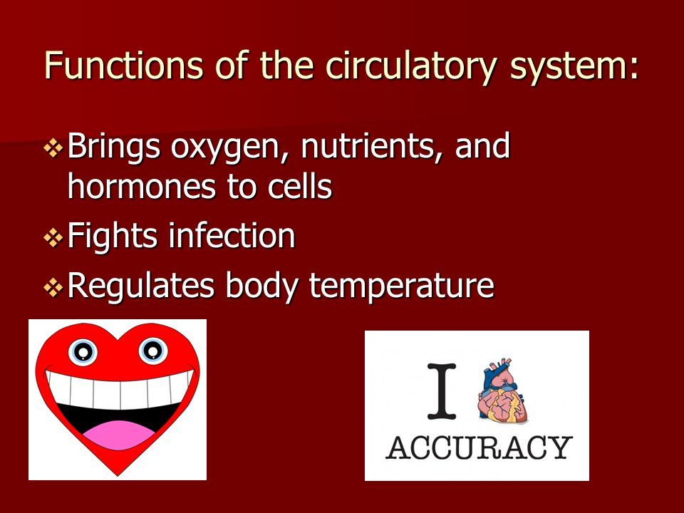 Functions of the circulatory system:  Brings oxygen, nutrients, and hormones to cells  Fights infection  Regulates body temperature