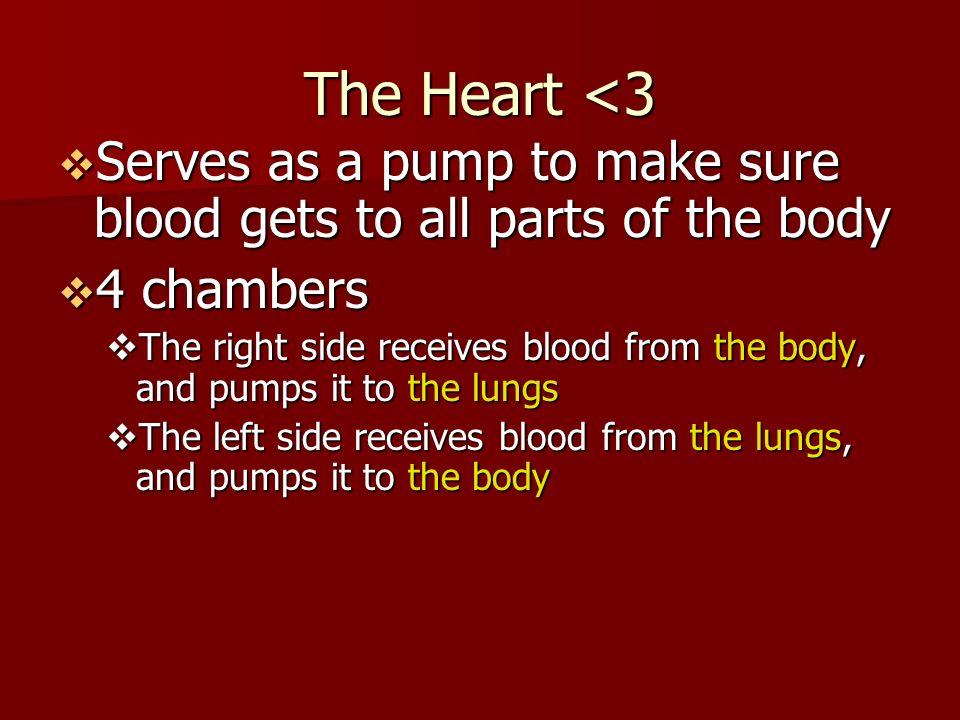 The Heart <3  Serves as a pump to make sure blood gets to all parts of the body  4 chambers  The right side receives blood from the body, and pumps it to the lungs  The left side receives blood from the lungs, and pumps it to the body