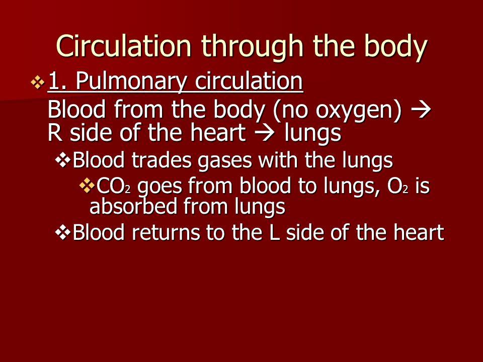 Circulation through the body  1.
