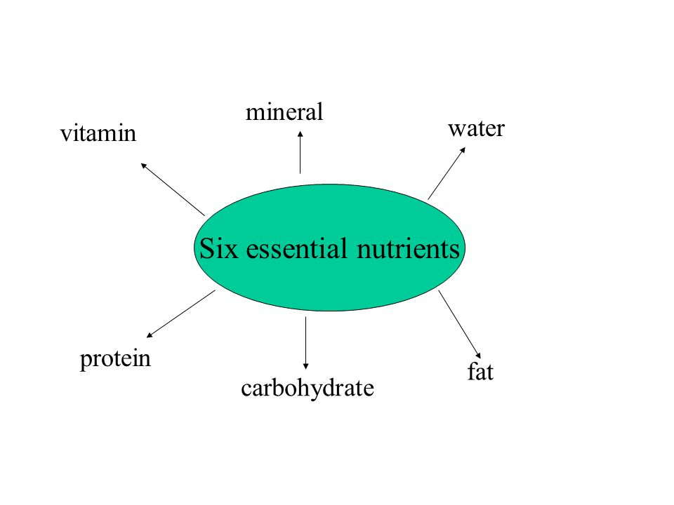 Six essential nutrients protein carbohydrate fat vitamin mineral water