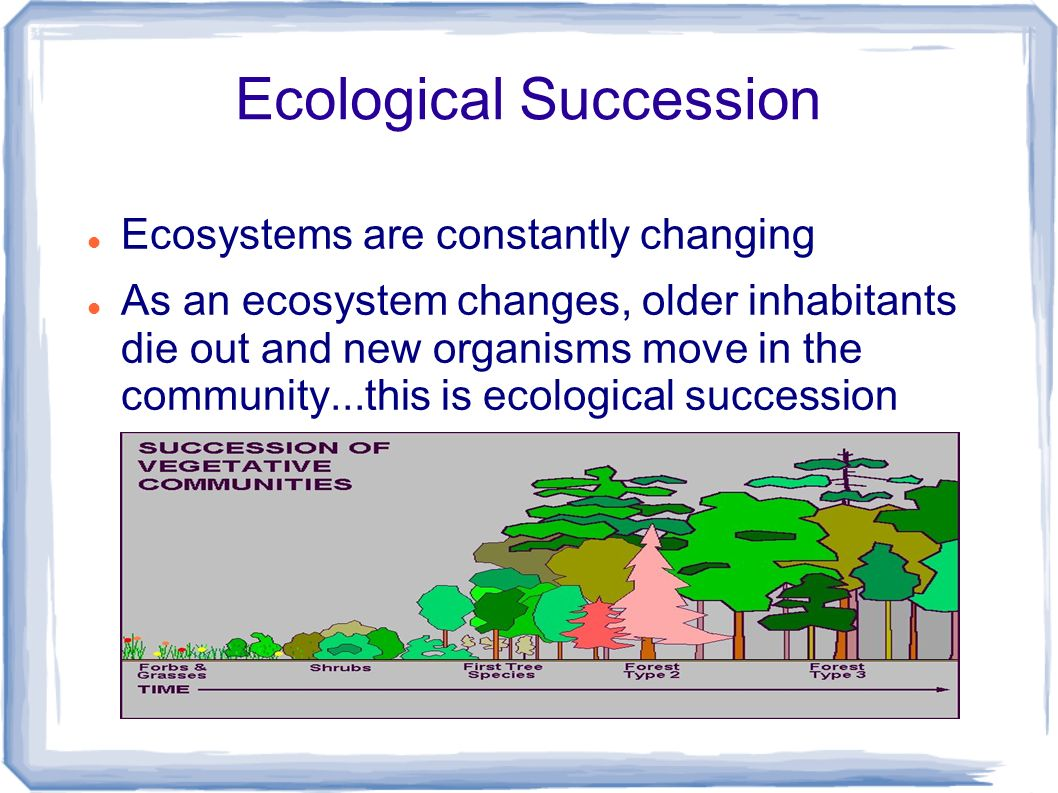 ecological succession essay Hydrosere - a wetland example of succession in action previous a hydrosere is simply a succession which starts in water a wetland wetland ecological survey.