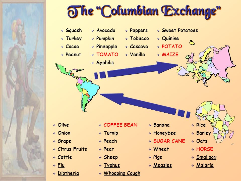 tobacco in the columbian exchange Tobacco, and cacao beans (for chocolate)  some aspects of the columbian exchange had a tragic impact on many native americans disease was just as much a part of.