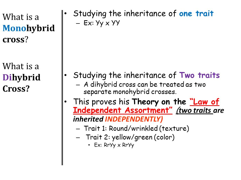 Dihybrid cross punnett square worksheet pdf