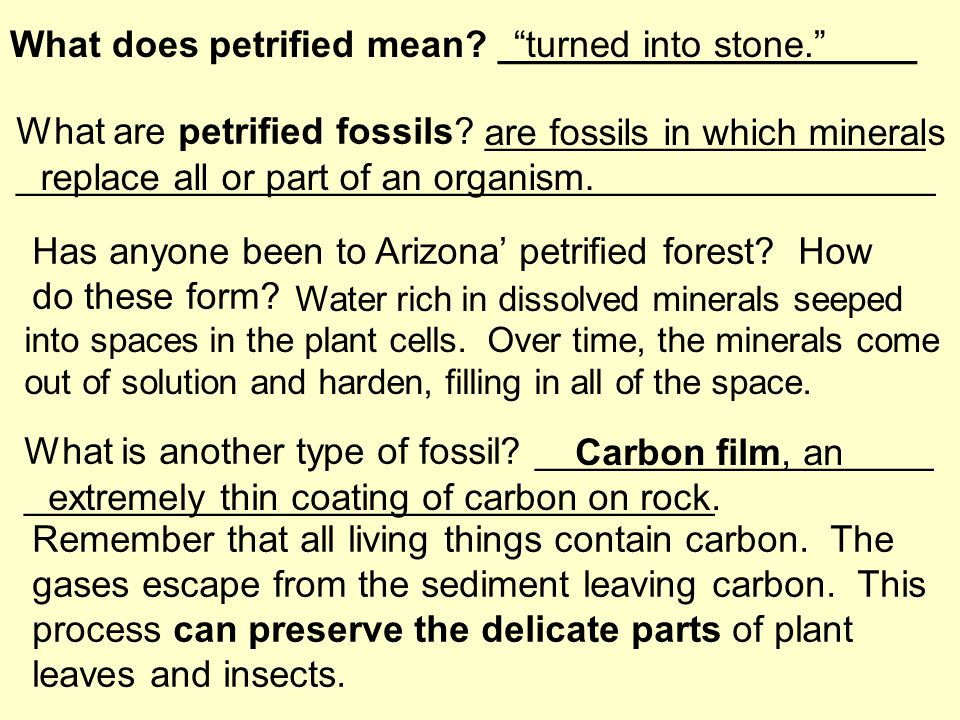 Section 10.1 Fossils Key Concepts How do fossils form? What are ...