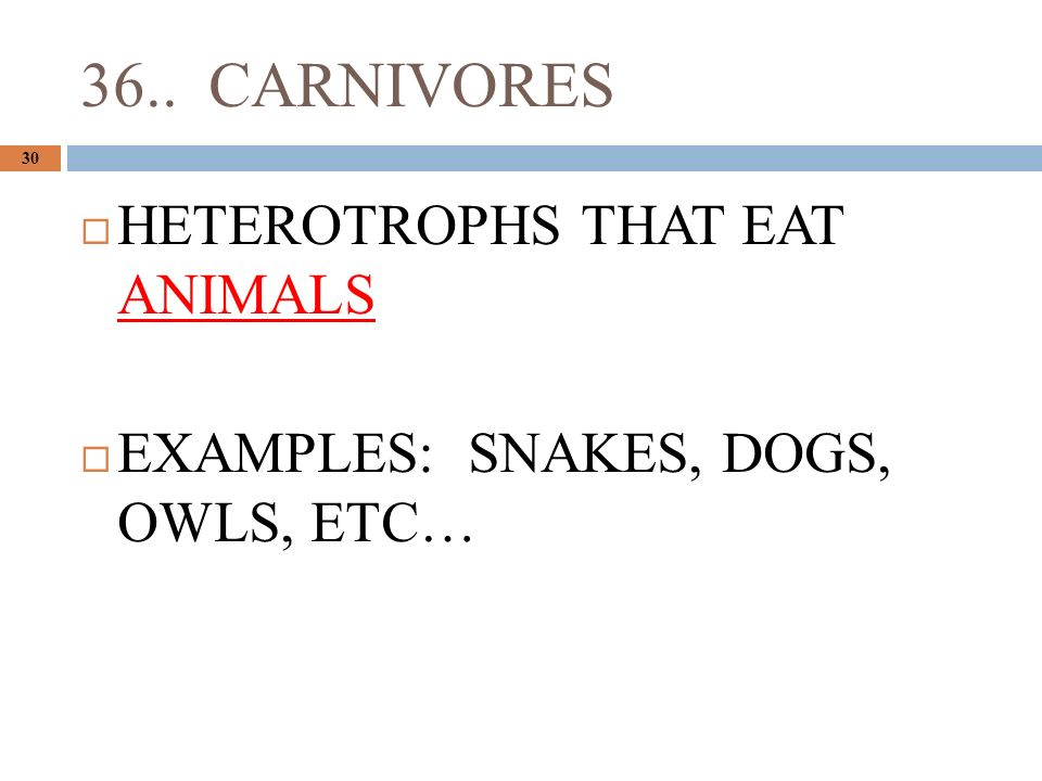 36.. CARNIVORES 30  HETEROTROPHS THAT EAT ANIMALS  EXAMPLES: SNAKES, DOGS, OWLS, ETC…
