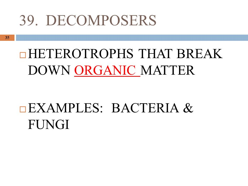 39. DECOMPOSERS 35  HETEROTROPHS THAT BREAK DOWN ORGANIC MATTER  EXAMPLES: BACTERIA & FUNGI