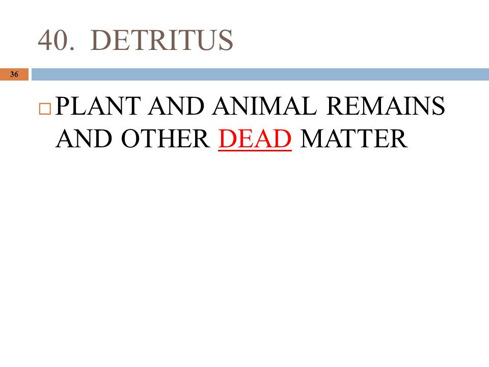 40. DETRITUS 36  PLANT AND ANIMAL REMAINS AND OTHER DEAD MATTER