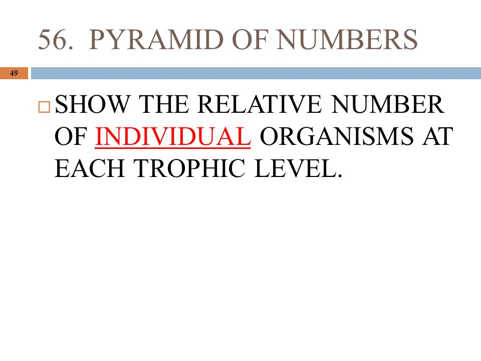 56. PYRAMID OF NUMBERS 49  SHOW THE RELATIVE NUMBER OF INDIVIDUAL ORGANISMS AT EACH TROPHIC LEVEL.