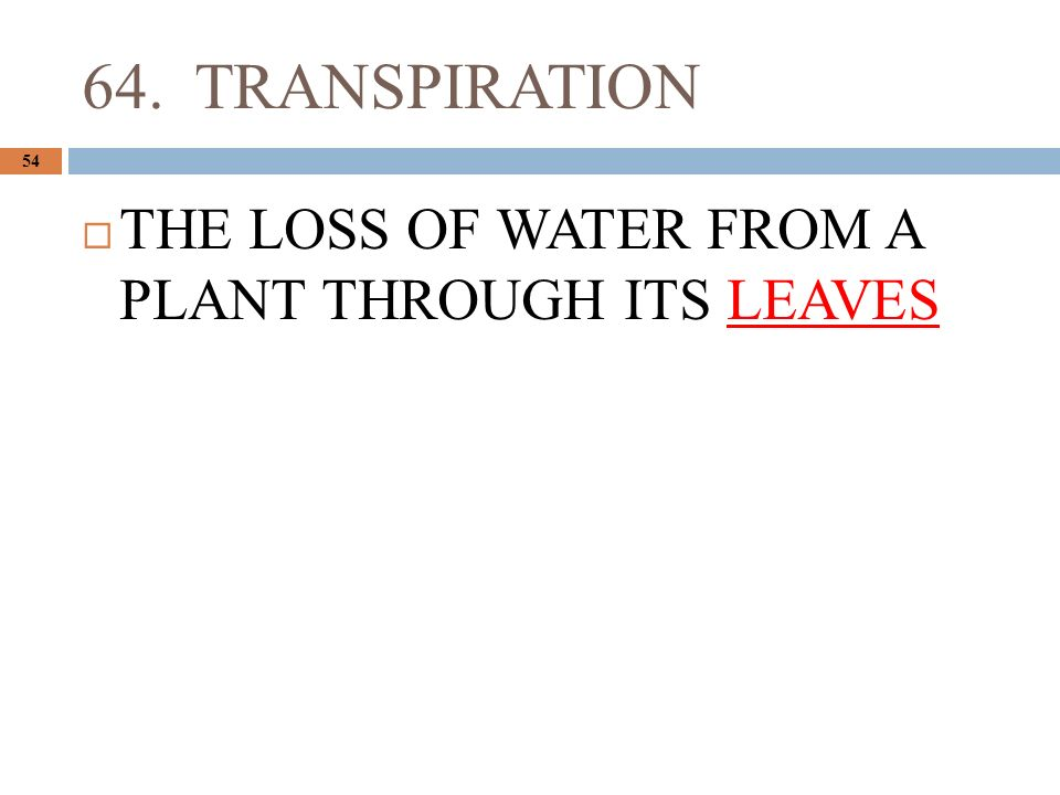 64. TRANSPIRATION 54  THE LOSS OF WATER FROM A PLANT THROUGH ITS LEAVES