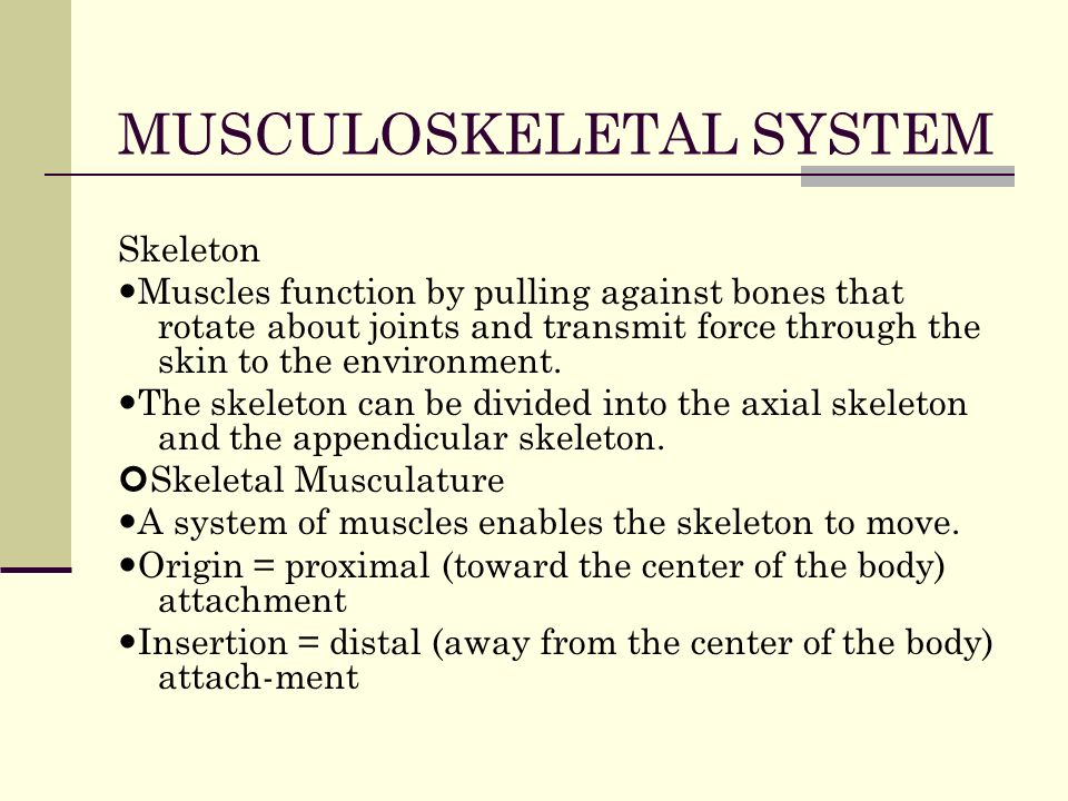 university of phoenix material the skeletal system exercises The skeletal system excercise essay 4511 words | 19 pages university of phoenix material the skeletal system exercises after viewing the.