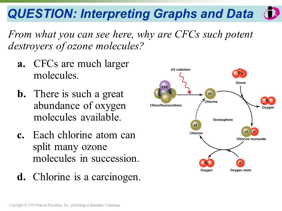 Copyright © 2006 Pearson Education, Inc., publishing as Benjamin Cummings QUESTION: Interpreting Graphs and Data a.CFCs are much larger molecules.