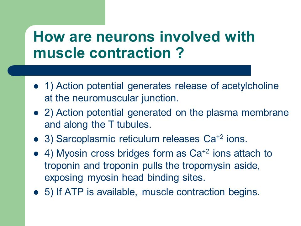 How Do Muscle Cells Contract  What Is The Structure Of A Muscle
