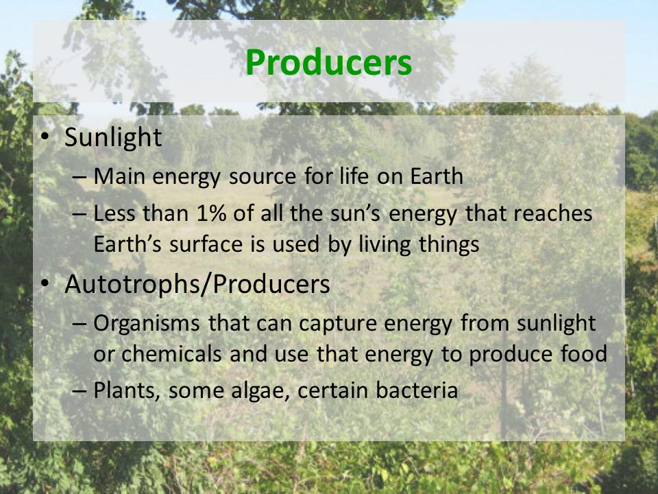 Producers Sunlight – Main energy source for life on Earth – Less than 1% of all the sun's energy that reaches Earth's surface is used by living things Autotrophs/Producers – Organisms that can capture energy from sunlight or chemicals and use that energy to produce food – Plants, some algae, certain bacteria