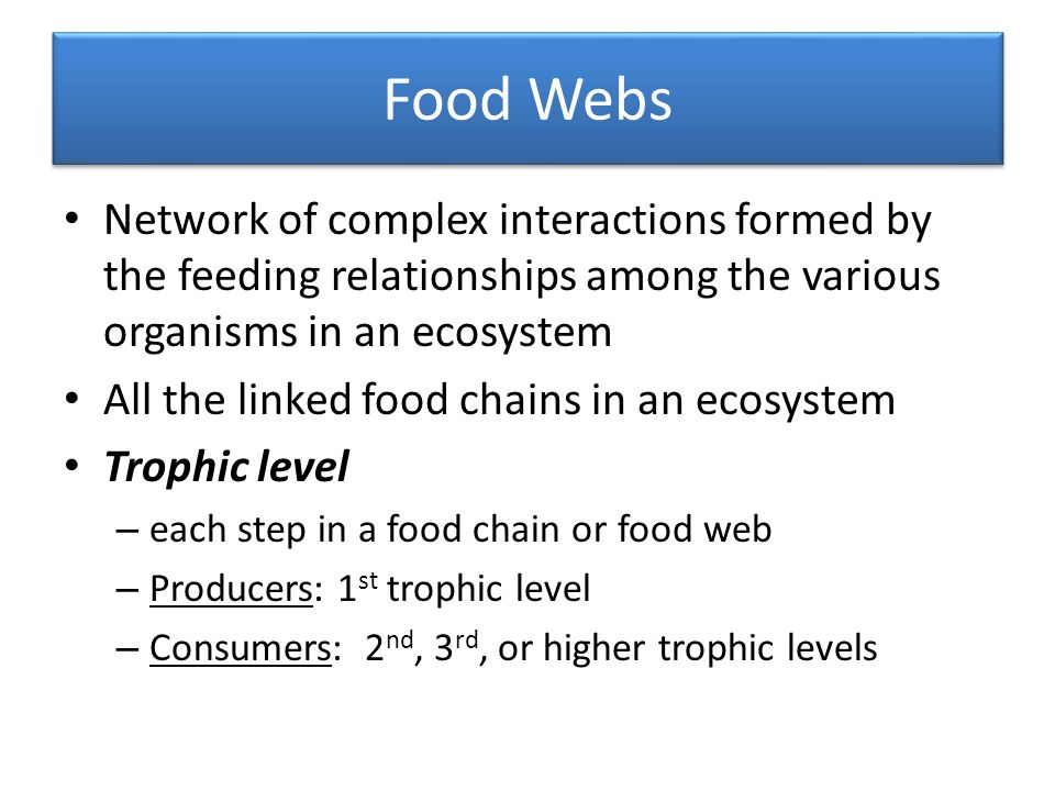 Food Webs Network of complex interactions formed by the feeding relationships among the various organisms in an ecosystem All the linked food chains in an ecosystem Trophic level – each step in a food chain or food web – Producers: 1 st trophic level – Consumers: 2 nd, 3 rd, or higher trophic levels