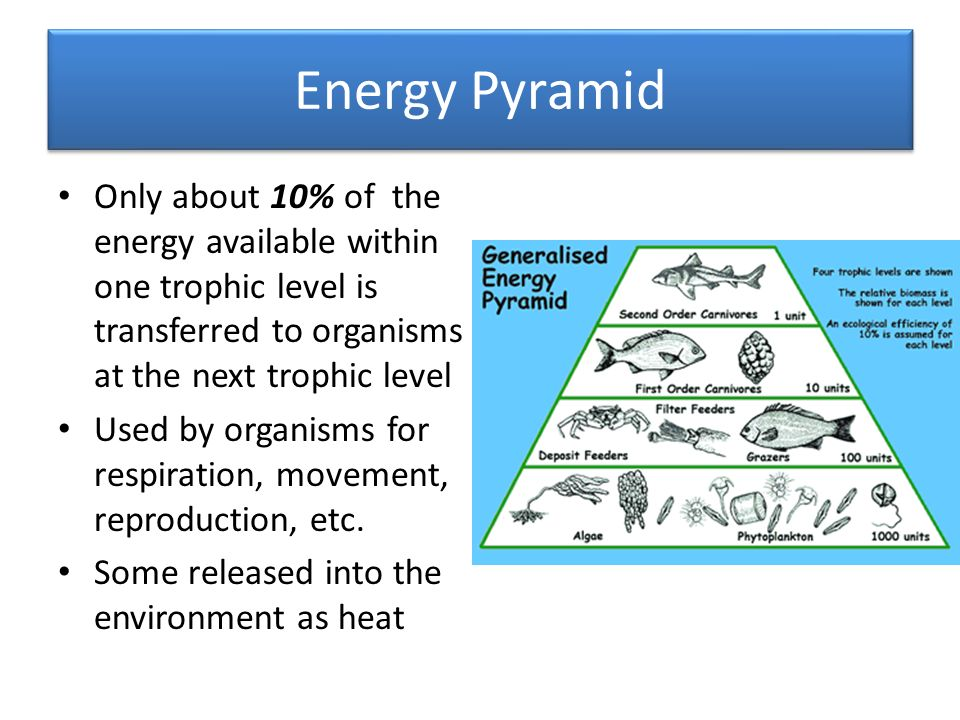 Energy Pyramid Only about 10% of the energy available within one trophic level is transferred to organisms at the next trophic level Used by organisms for respiration, movement, reproduction, etc.