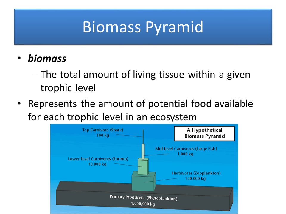 Biomass Pyramid biomass – The total amount of living tissue within a given trophic level Represents the amount of potential food available for each trophic level in an ecosystem