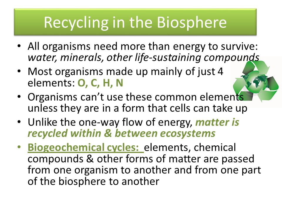 Recycling in the Biosphere All organisms need more than energy to survive: water, minerals, other life-sustaining compounds Most organisms made up mainly of just 4 elements: O, C, H, N Organisms can't use these common elements unless they are in a form that cells can take up Unlike the one-way flow of energy, matter is recycled within & between ecosystems Biogeochemical cycles: elements, chemical compounds & other forms of matter are passed from one organism to another and from one part of the biosphere to another