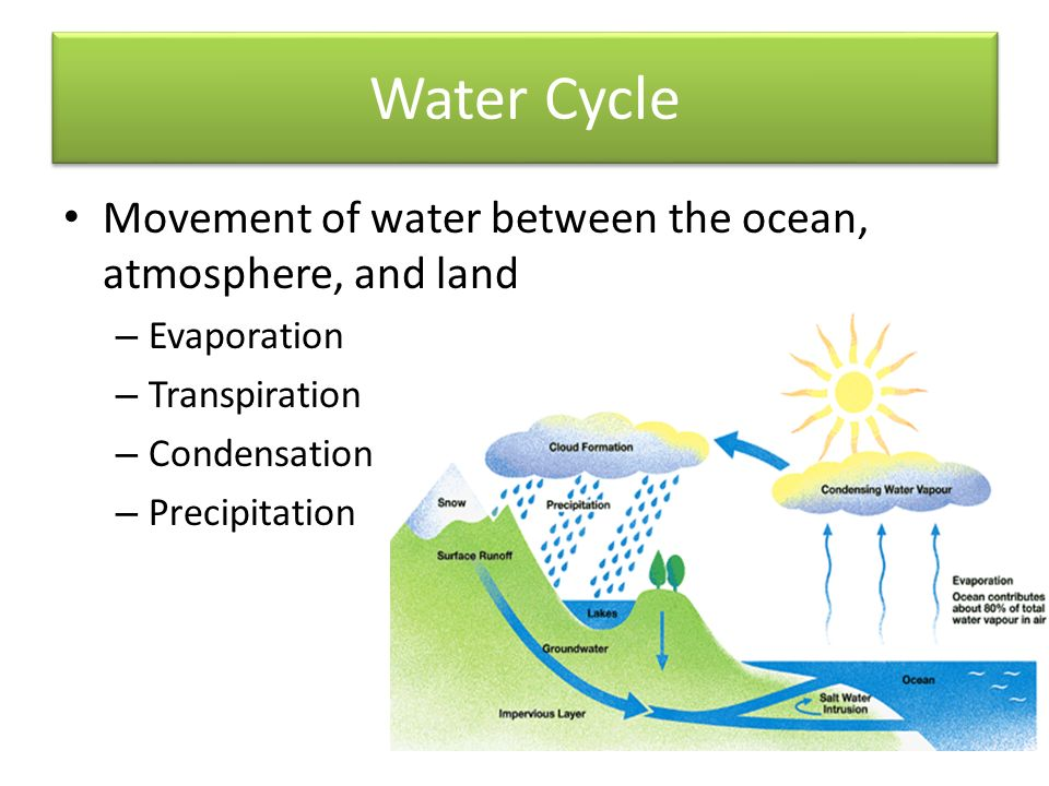 Water Cycle Movement of water between the ocean, atmosphere, and land – Evaporation – Transpiration – Condensation – Precipitation
