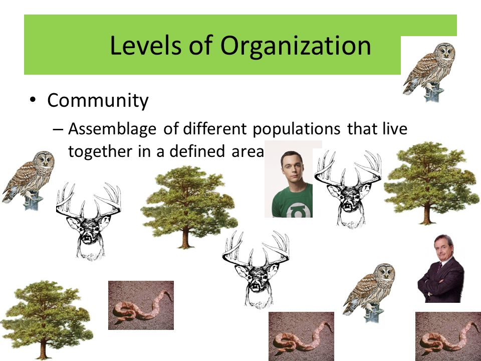 Levels of Organization Community – Assemblage of different populations that live together in a defined area