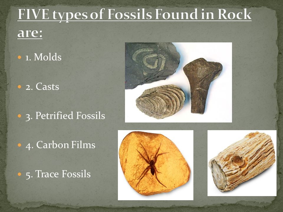Notes. Fossils are perserved remains or traces of living things ...