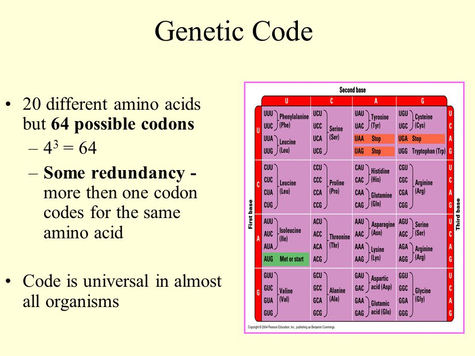 Protein synthesis central dogma of molecular biology dna is used 5 genetic code 20 different amino acids but 64 possible codons 4 3 64 some redundancy more then one codon codes for the same amino acid code is malvernweather Gallery