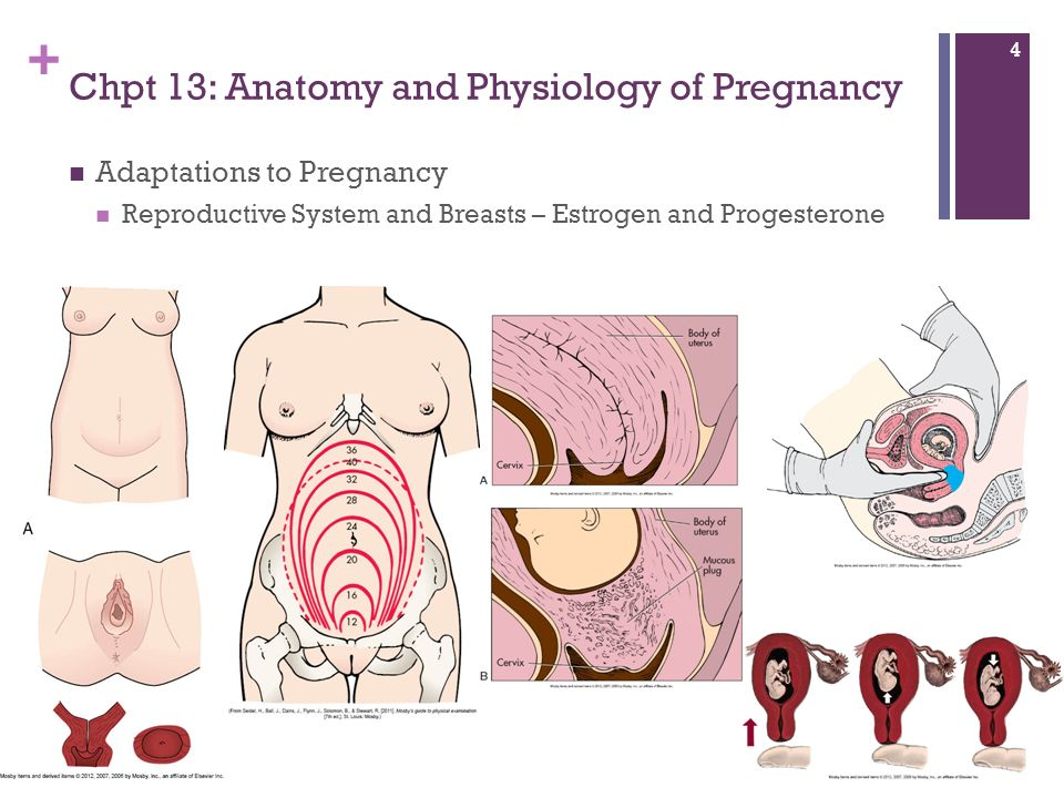 Pregnancy Highlights Chapters 13, 14, & 15 Maternity & Women\'s ...