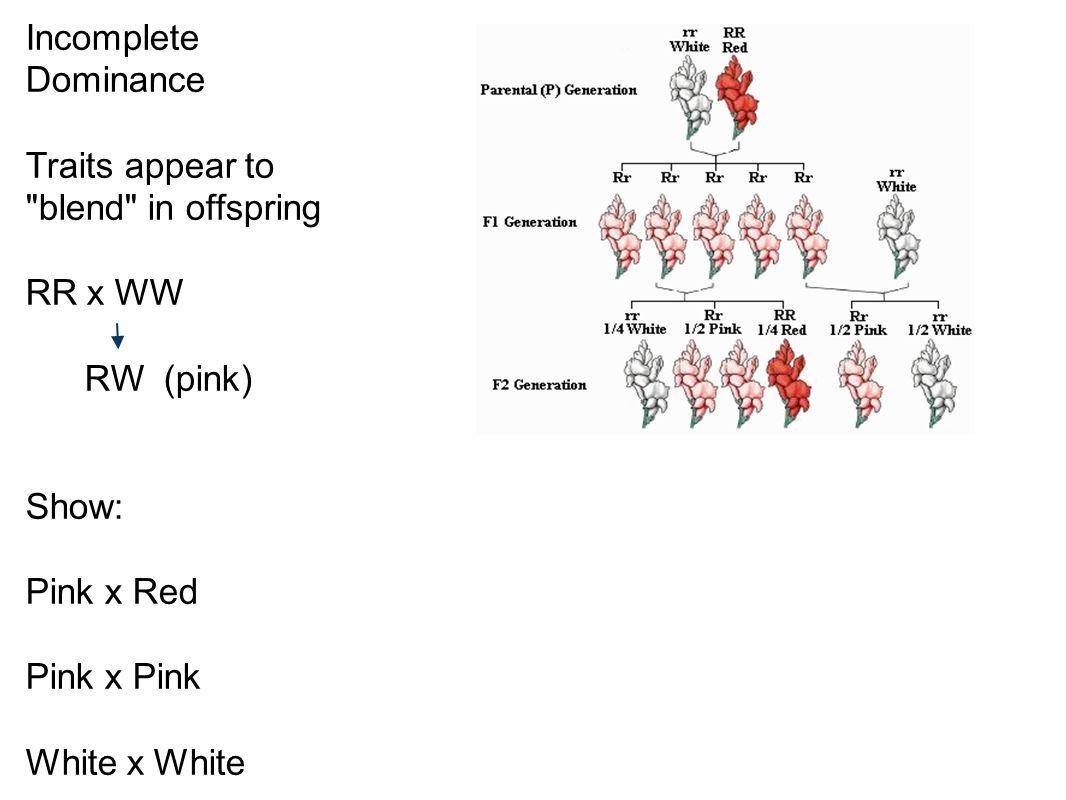 math worksheet : codominance multiple alleles worksheet  worksheets for education : Multiple Allele Worksheet