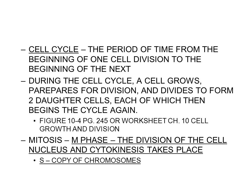MITOSIS The Cell Cycle Mitosis Tutorial INTERPHASE The cell is – Cell Division Worksheet