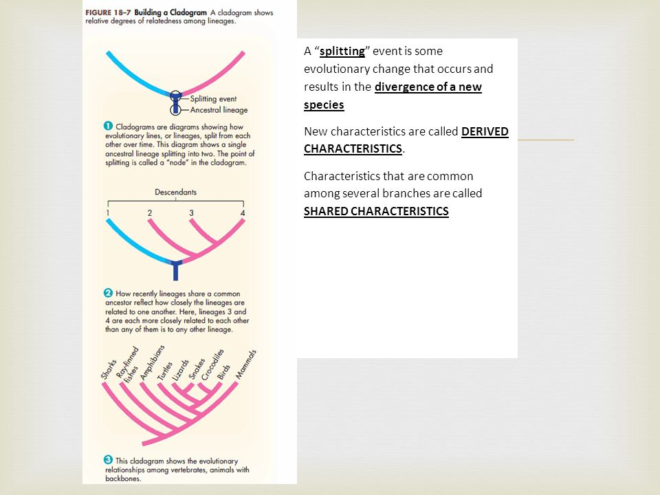 Tree of Life Pictorial representation of the branching – Patterns of Evolution Worksheet