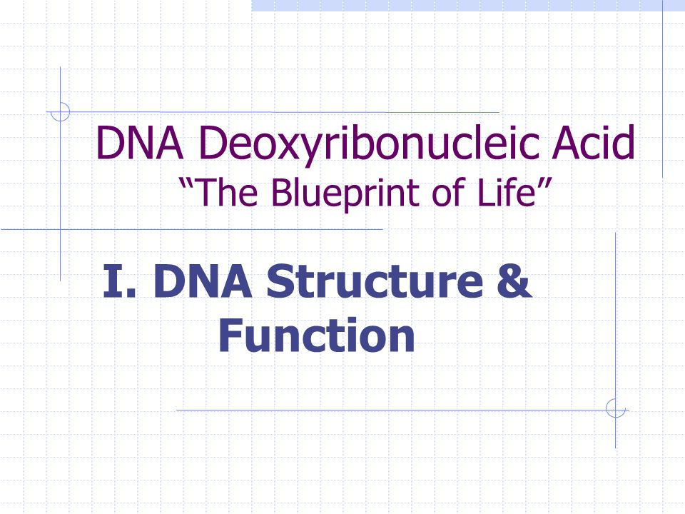 Dna deoxyribonucleic acid the blueprint of life i dna structure 2 malvernweather Choice Image