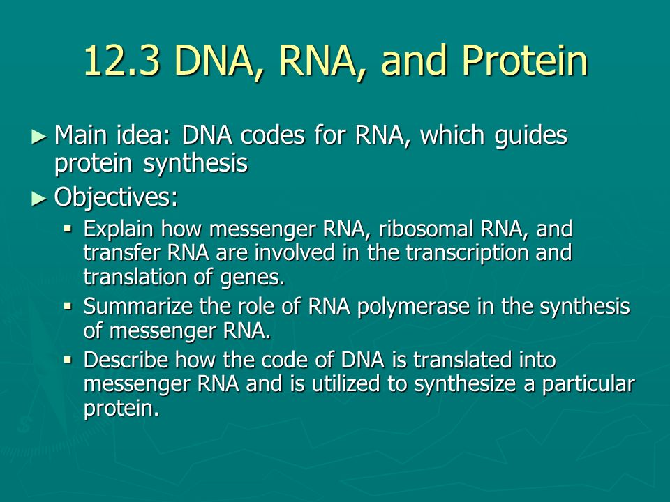 the role of dna in protein