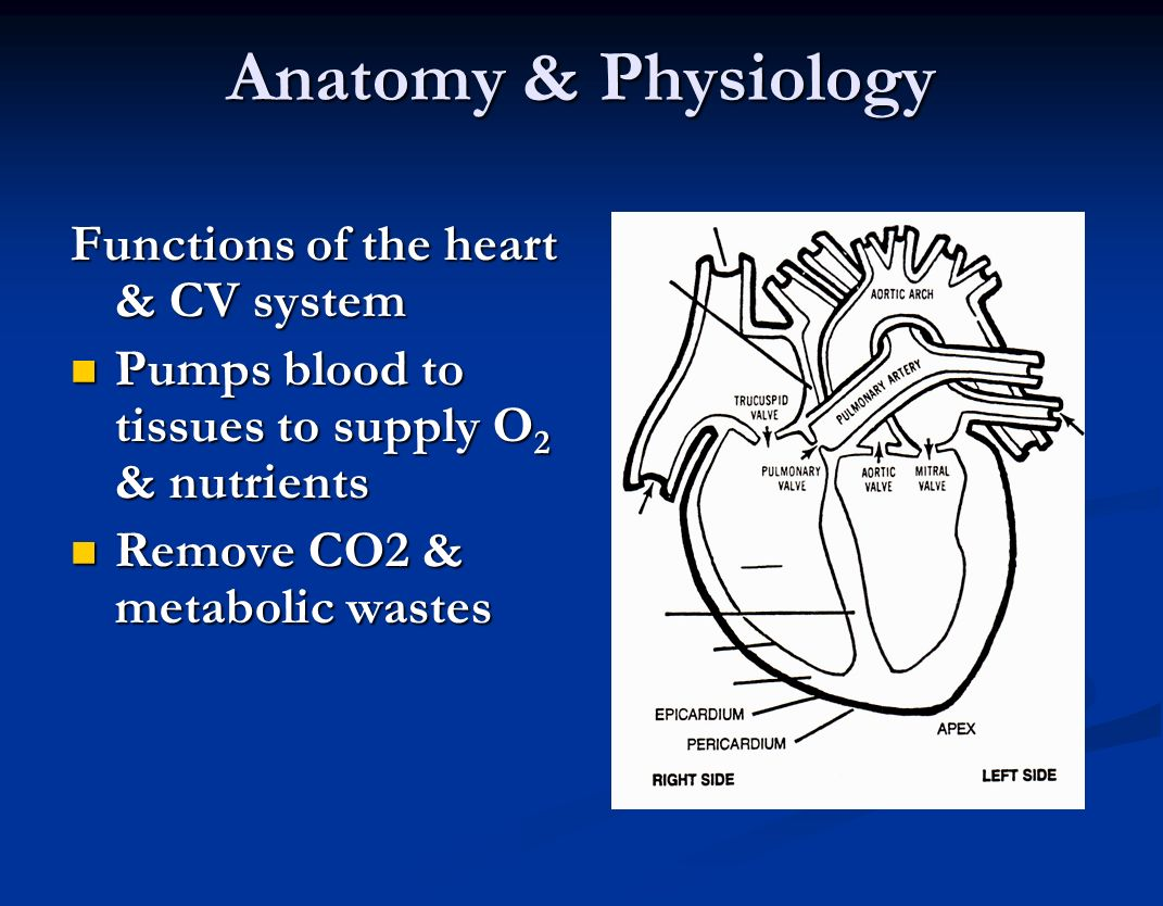cardio vascular system assessment Cardiovascular examination - osce guide (old version) the cardio vascular / peripheral vascular exam videomov chest assessment.