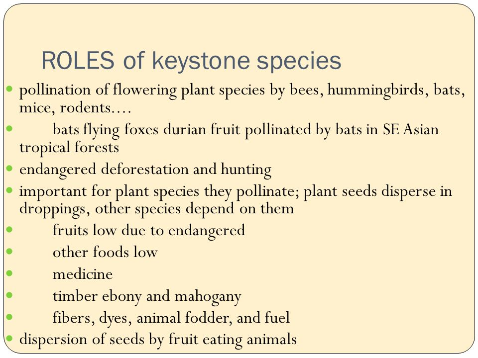 ROLES of keystone species pollination of flowering plant species by bees, hummingbirds, bats, mice, rodents....