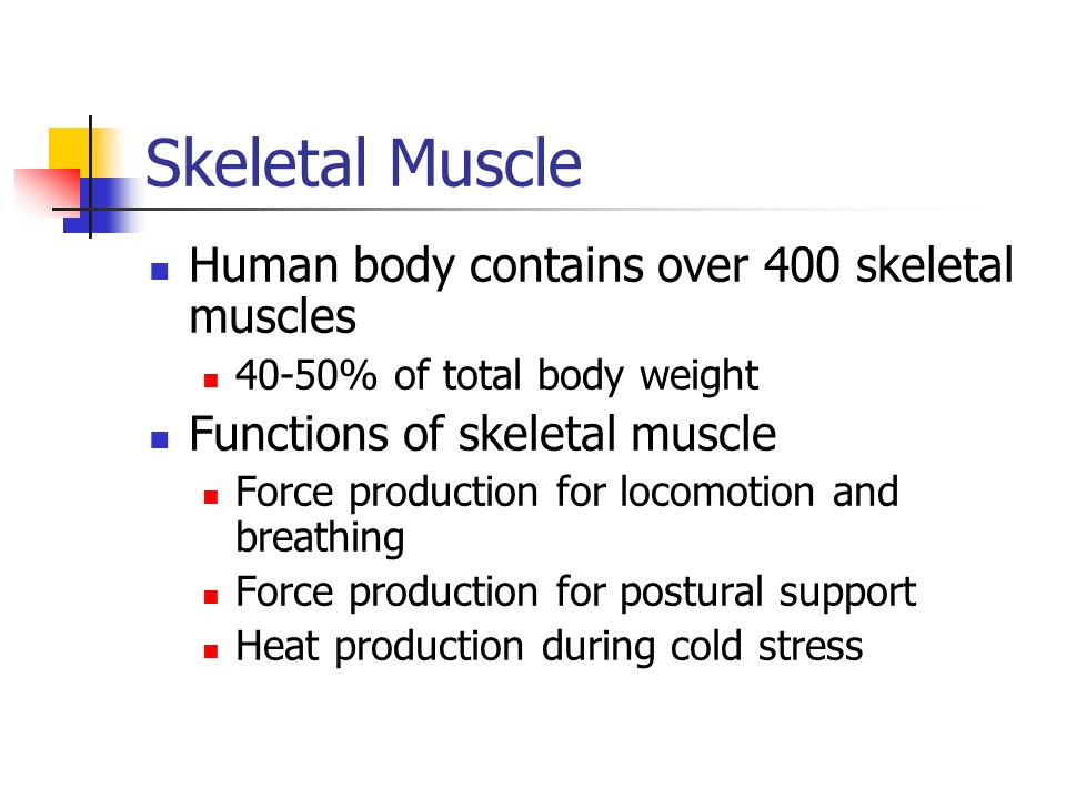 structure and function of skeletal muscle. skeletal muscle human, Muscles