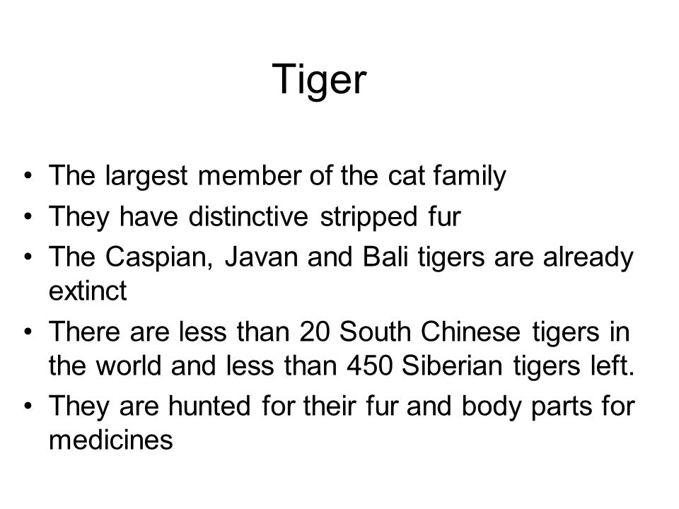 an introduction to the tiger the largest of the cat family The bobcat is a north american member of the big cat family the third largest big cat in the of the most noticeable characteristics of the tiger.
