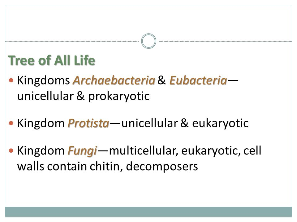 Tree of All Life Archaebacteria Eubacteria Kingdoms Archaebacteria & Eubacteria— unicellular & prokaryotic Protista Kingdom Protista—unicellular & eukaryotic Fungi Kingdom Fungi—multicellular, eukaryotic, cell walls contain chitin, decomposers