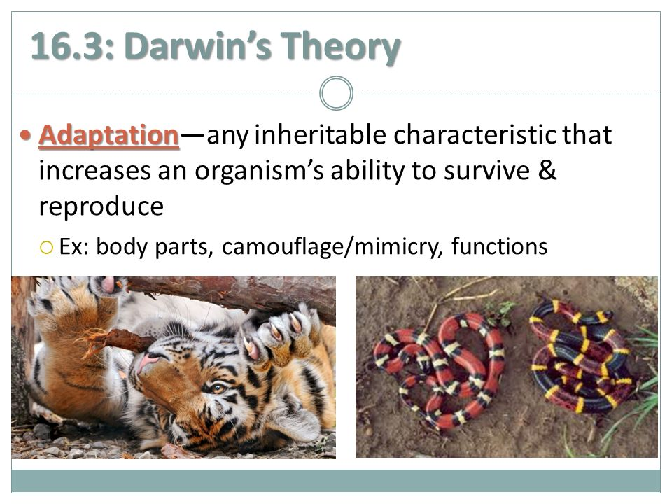 16.3: Darwin's Theory Adaptation Adaptation—any inheritable characteristic that increases an organism's ability to survive & reproduce  Ex: body parts, camouflage/mimicry, functions
