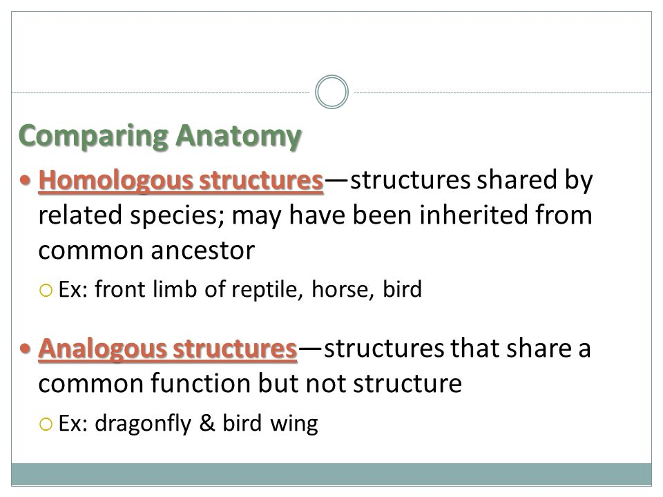 Comparing Anatomy Homologous structures Homologous structures—structures shared by related species; may have been inherited from common ancestor  Ex: front limb of reptile, horse, bird Analogous structures Analogous structures—structures that share a common function but not structure  Ex: dragonfly & bird wing