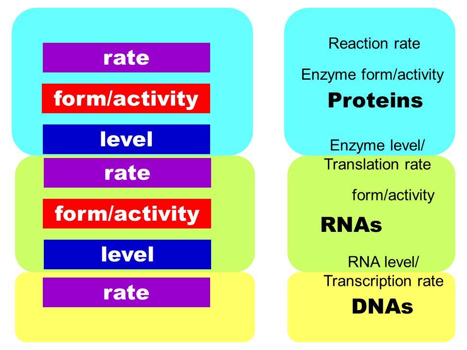 RNA level/ Transcription rate form/activity Enzyme level ...