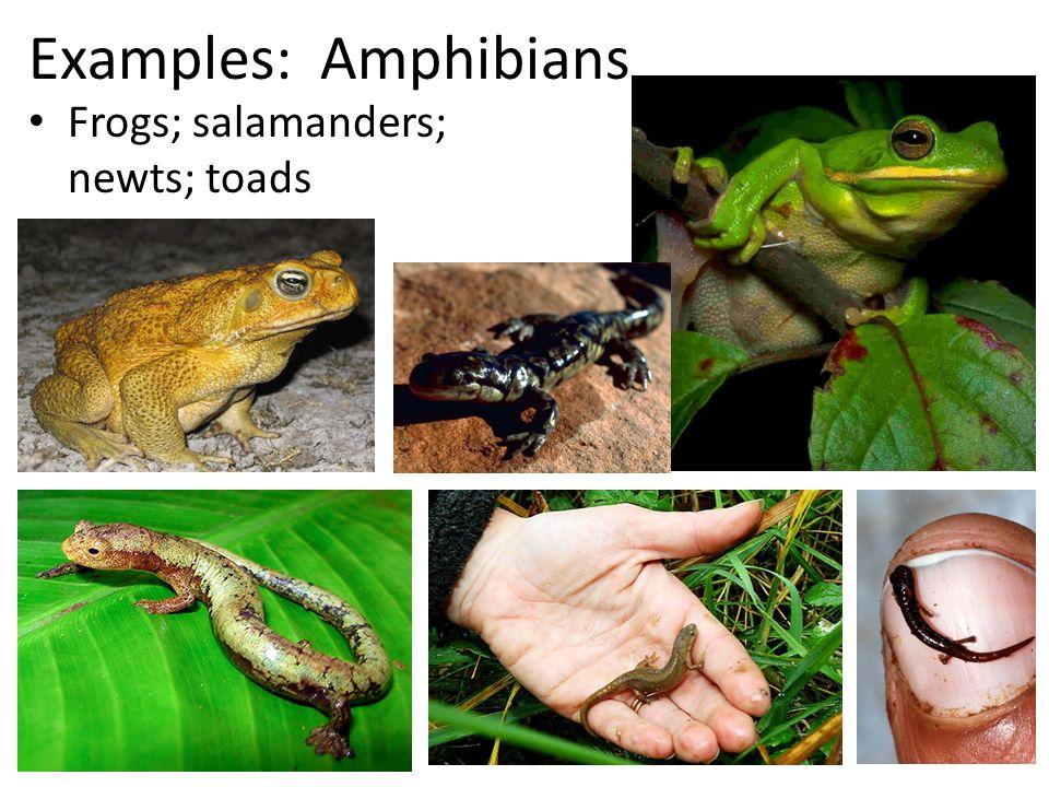 Decline in amphibian populations  Wikipedia