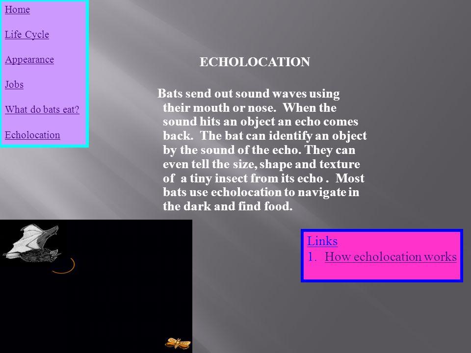 bats echolocation essay