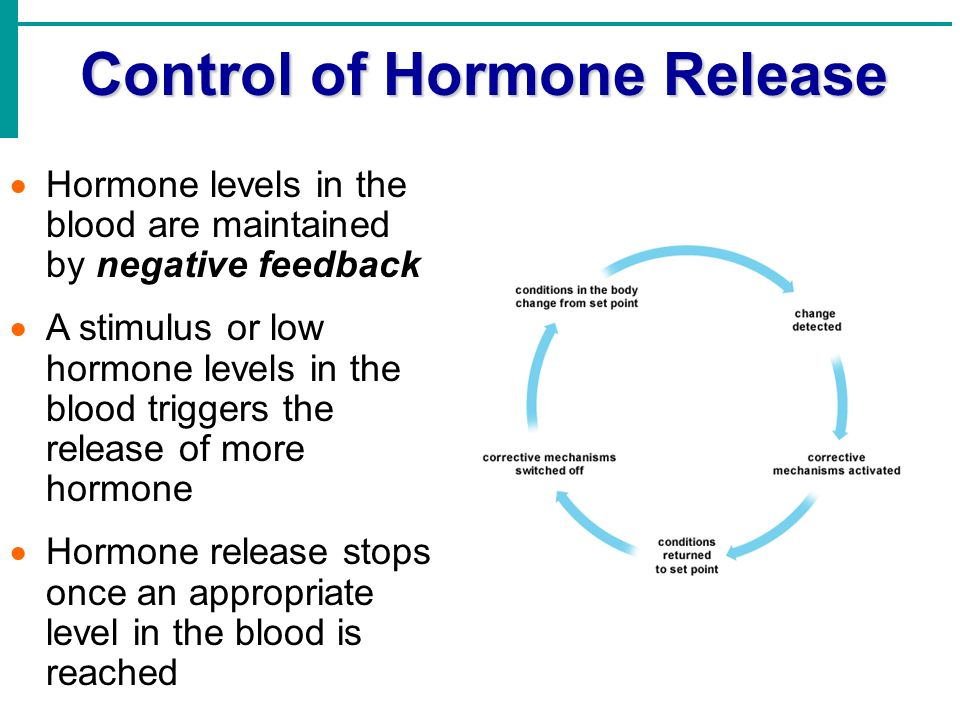 the hormonal mechanism of love ★ hormonal mechanism how we burn fat - losing 50 pounds in 4 months how to lose 1 pound a week calculator protein diet to lose 10 pounds in a week.