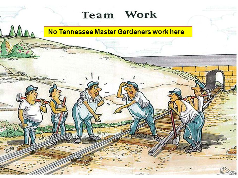 19 No Tennessee Master Gardeners work here