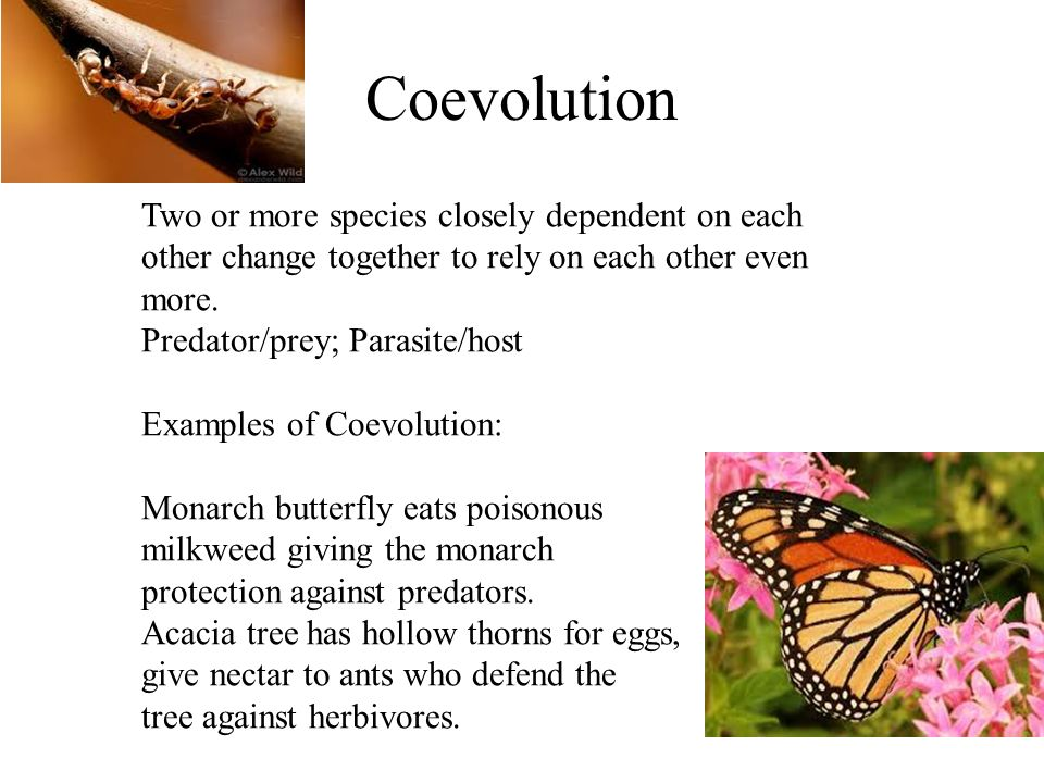 Evolution Natural Selection Unit 9 Biology Fossils Cast Mold Ppt
